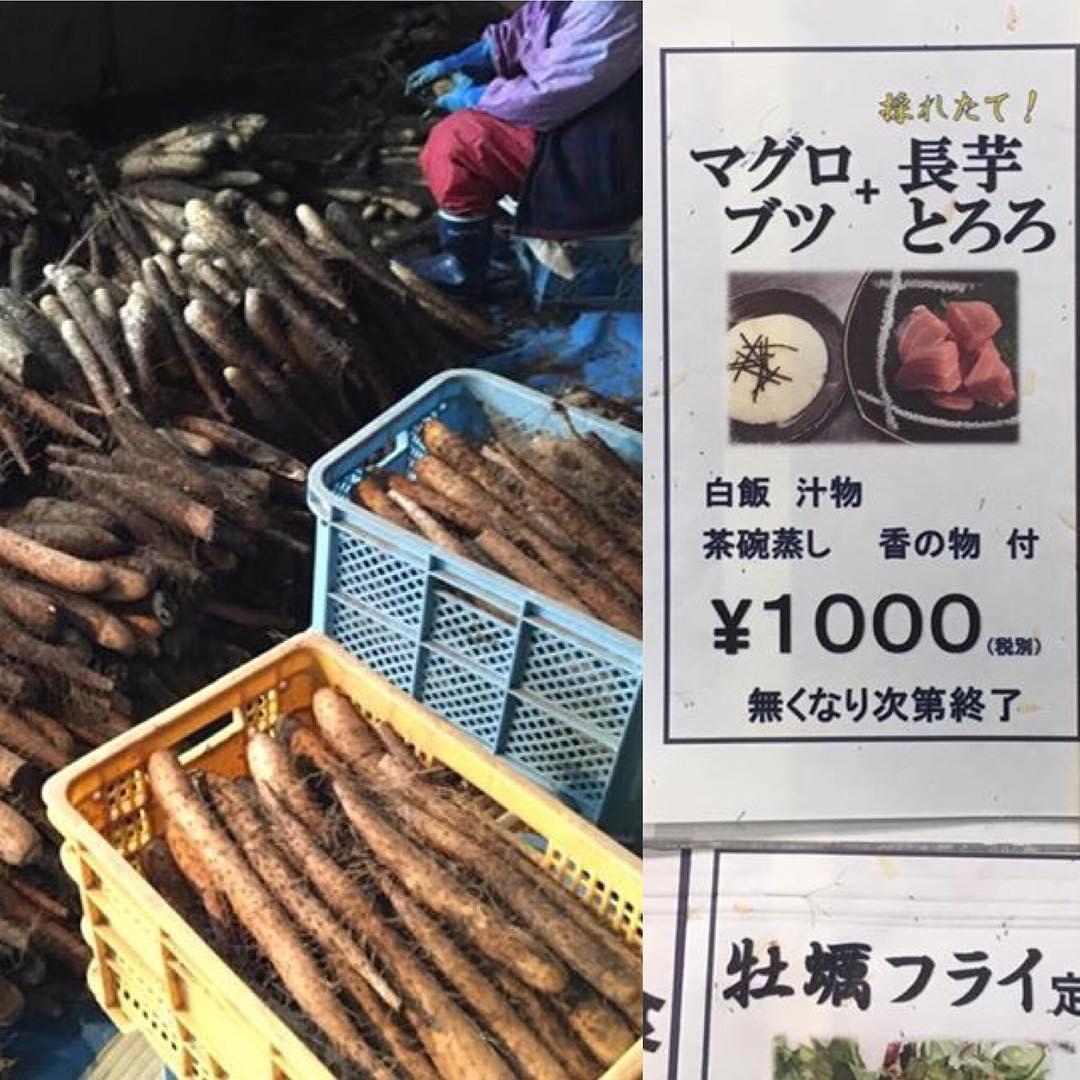 新ランチメニュー  厚田産の『砂丘地長芋』を トロロにしました。 マグロのブツと一緒にどうぞ!  #二三一 #海鮮 #酒蔵