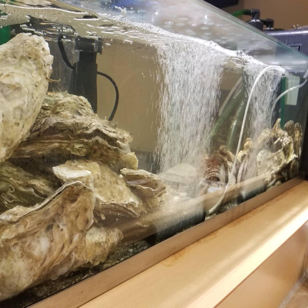 今日も気持ち良さそうな貝たち☺️💓. . 刺身、焼き、天ぷら🙆🙆. . #牡蠣 #ほっき #あわび #つぶ #ホタテ #ホヤ #海鮮 #酒蔵 #二三一